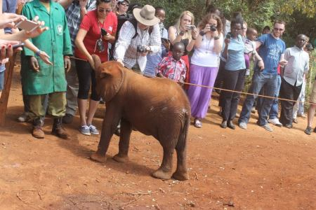 a photo from my May 2014 trip to David Sheldrick Wildlife Trust in Kenya